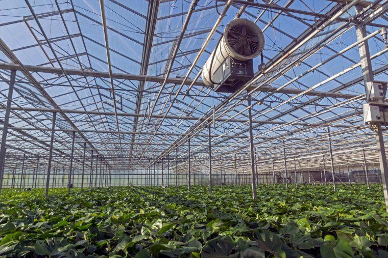 Illustratie: foto van een kas vol gatenplanten.